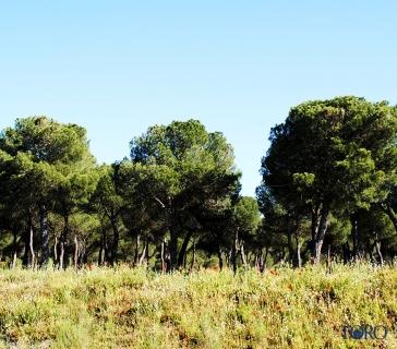 pinares (5)