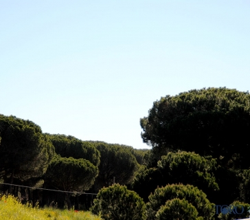 pinares (6)